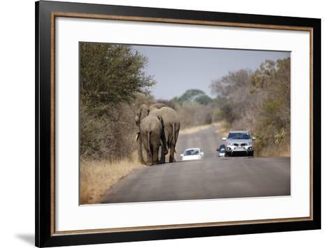 Elephants and Tourist Vehicles, South Africa-Richard Du Toit-Framed Art Print