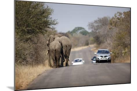 Elephants and Tourist Vehicles, South Africa-Richard Du Toit-Mounted Photographic Print