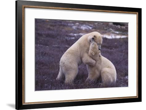 Polar Bears Hugging-DLILLC-Framed Art Print