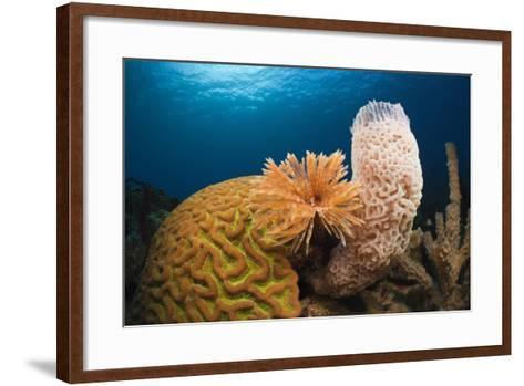 Caribbean Coral Reef-Reinhard Dirscherl-Framed Art Print