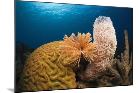 Caribbean Coral Reef-Reinhard Dirscherl-Mounted Photographic Print