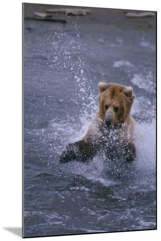 Grizzly Splashing in Water-DLILLC-Mounted Photographic Print