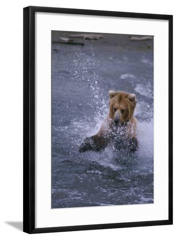 Grizzly Splashing in Water-DLILLC-Framed Art Print