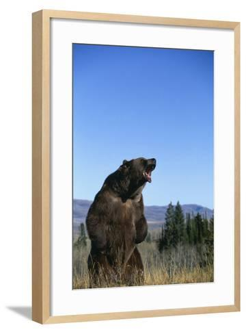 Grizzly Roaring in Field-DLILLC-Framed Art Print