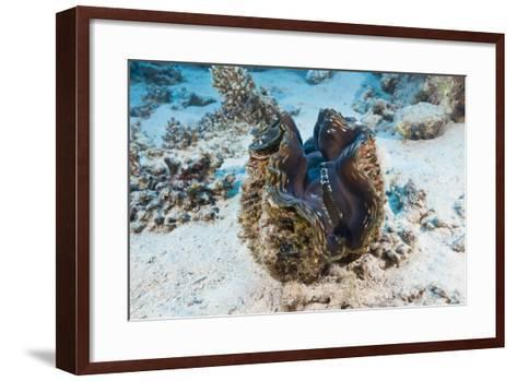 Giant Clam (Tridacna Squamosa)-Reinhard Dirscherl-Framed Art Print