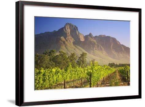 Rows of Grapevines at Vineyard-Jon Hicks-Framed Art Print