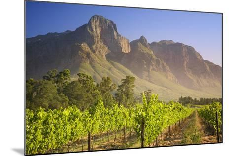 Rows of Grapevines at Vineyard-Jon Hicks-Mounted Photographic Print