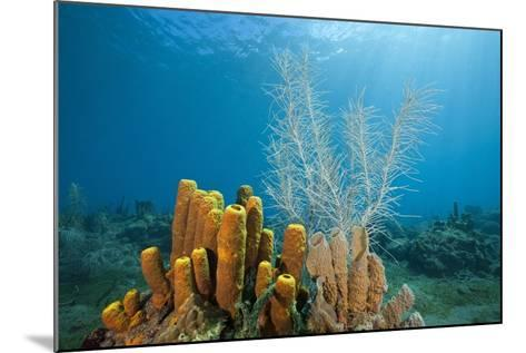 Yellow Tube Sponges in Coral Reef-Reinhard Dirscherl-Mounted Photographic Print