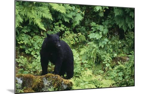 Black Bear in Forest-DLILLC-Mounted Photographic Print
