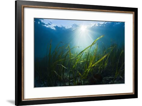 Seagrass-Reinhard Dirscherl-Framed Art Print