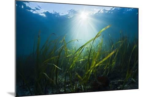 Seagrass-Reinhard Dirscherl-Mounted Photographic Print