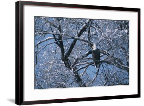 Bald Eagle Perching in Tree-DLILLC-Framed Art Print