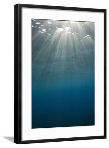 Sunbeams Filtering through the Ocean Surface-Reinhard Dirscherl-Framed Art Print
