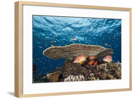 Longjawed Squirrelfish (Sargocentron Spiniferum)-Reinhard Dirscherl-Framed Art Print