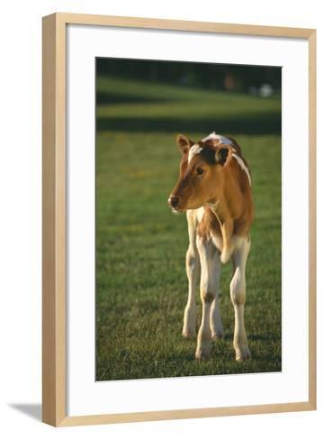 Calf Standing in Field-DLILLC-Framed Art Print