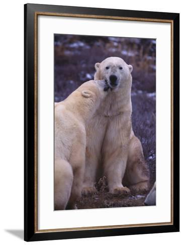Polar Bears Nuzzling-DLILLC-Framed Art Print