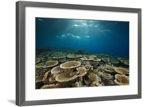 Table Corals (Acropora)-Reinhard Dirscherl-Framed Art Print
