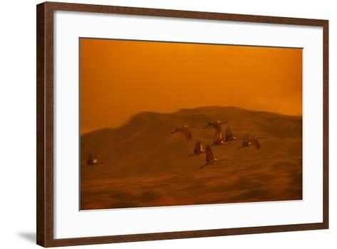 Sandhill Cranes Flying-DLILLC-Framed Art Print
