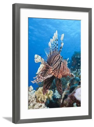 Lionfish (Pterois Miles)-Reinhard Dirscherl-Framed Art Print