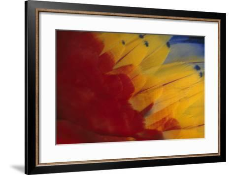 Scarlet Macaw Feathers-DLILLC-Framed Art Print