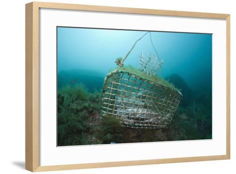 Fish Trap over a Coral Reef, Cap De Creus, Costa Brava, Spain-Reinhard Dirscherl-Framed Art Print