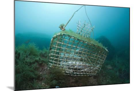 Fish Trap over a Coral Reef, Cap De Creus, Costa Brava, Spain-Reinhard Dirscherl-Mounted Photographic Print