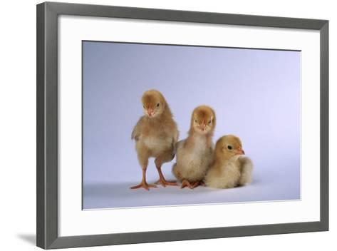 New Chicks-DLILLC-Framed Art Print