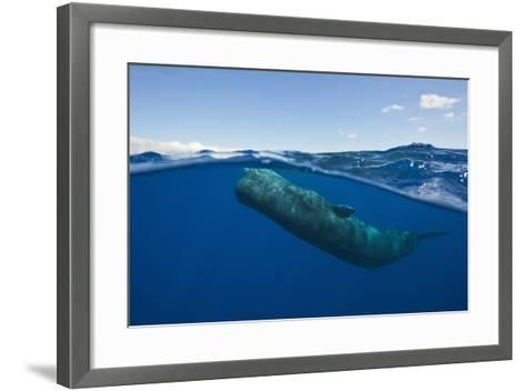 Sperm Whale (Physeter Macrocephalus)-Reinhard Dirscherl-Framed Art Print