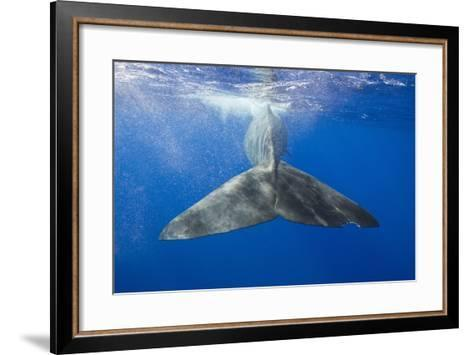 Sperm Whale Tail-Reinhard Dirscherl-Framed Art Print