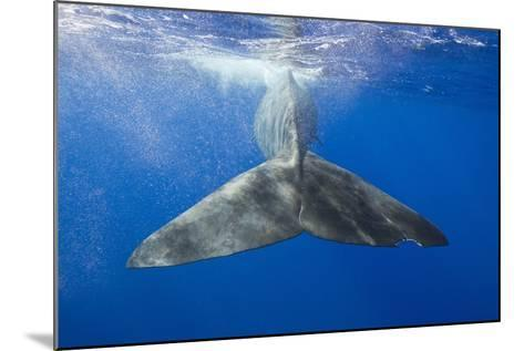 Sperm Whale Tail-Reinhard Dirscherl-Mounted Photographic Print