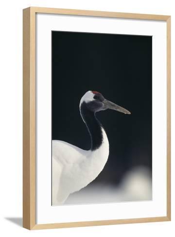 Red-Crowned Crane-DLILLC-Framed Art Print