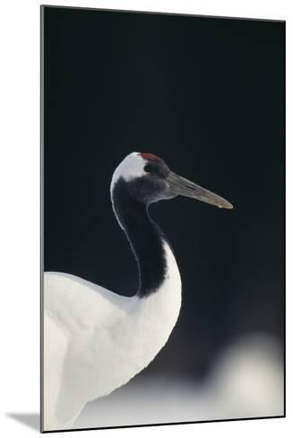 Red-Crowned Crane-DLILLC-Mounted Photographic Print
