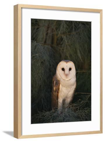 Barn Owl-DLILLC-Framed Art Print