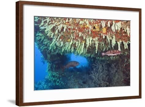 Soft Corals in Overhang, Maldives-Reinhard Dirscherl-Framed Art Print