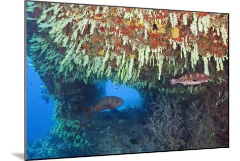 Soft Corals in Overhang, Maldives-Reinhard Dirscherl-Mounted Photographic Print