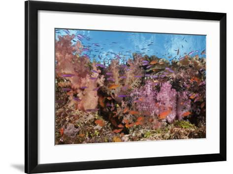 Colorful Fiji Coral Reef-Reinhard Dirscherl-Framed Art Print