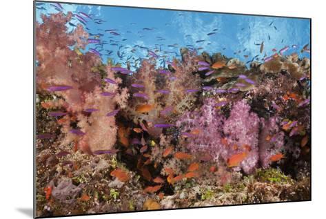 Colorful Fiji Coral Reef-Reinhard Dirscherl-Mounted Photographic Print
