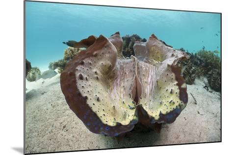 Giant Clam (Tridacna Squamosa)-Reinhard Dirscherl-Mounted Photographic Print