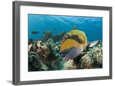 Moustache Triggerfish-Reinhard Dirscherl-Framed Art Print