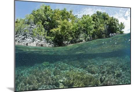 Shallow Coral Reef, Raja Ampat, West Papua, Indonesia-Reinhard Dirscherl-Mounted Photographic Print