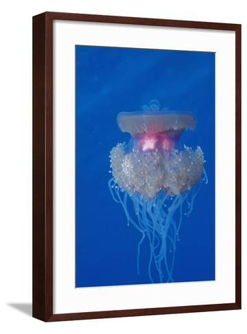 Crown Jellyfish (Netrostoma Setouchina), Red Sea, Egypt.-Reinhard Dirscherl-Framed Art Print