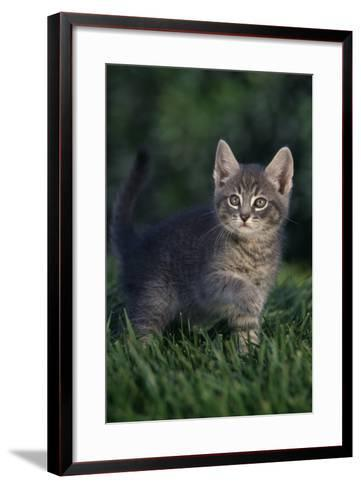 Kitten-DLILLC-Framed Art Print