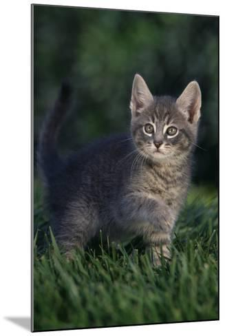 Kitten-DLILLC-Mounted Photographic Print