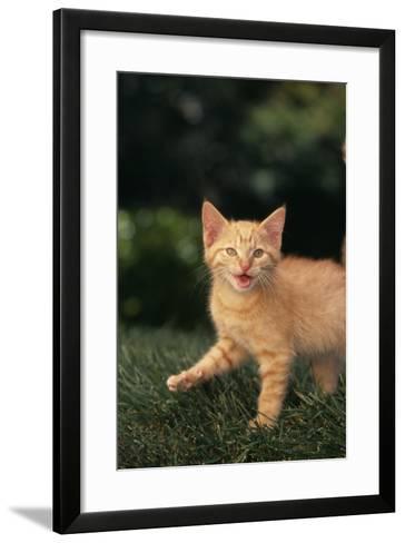 Angry Kitten in Grass-DLILLC-Framed Art Print