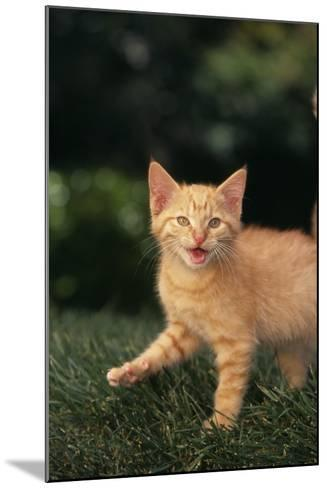 Angry Kitten in Grass-DLILLC-Mounted Photographic Print