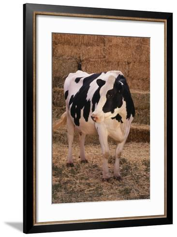Holstein Cow by Haystack-DLILLC-Framed Art Print