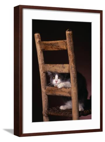Gray and White Cat Looking through Wood Chair-DLILLC-Framed Art Print