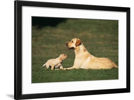 Labrador Mother and Puppy-DLILLC-Framed Art Print