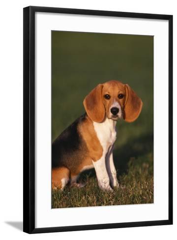 Beagle in Grass-DLILLC-Framed Art Print