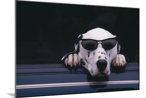Dalmatian Wearing Sunglasses-DLILLC-Mounted Photographic Print